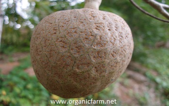 Govardhan Gardens Eco Organic Fruit Nursery