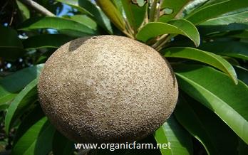 GOVARDHAN GARDENS ECO-ORGANIC FRUIT NURSERY